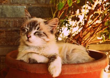 cat veterinarian care clinic sunderland mass