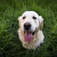 dog veterinarian clinic care sunderland mass